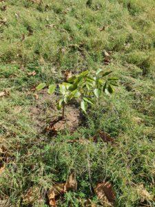 plant végétaux anse maurice